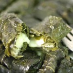 cheese-stuffed-grape-leaves