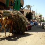 2-camels-with-palm-fronds