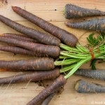 purple-carrots1